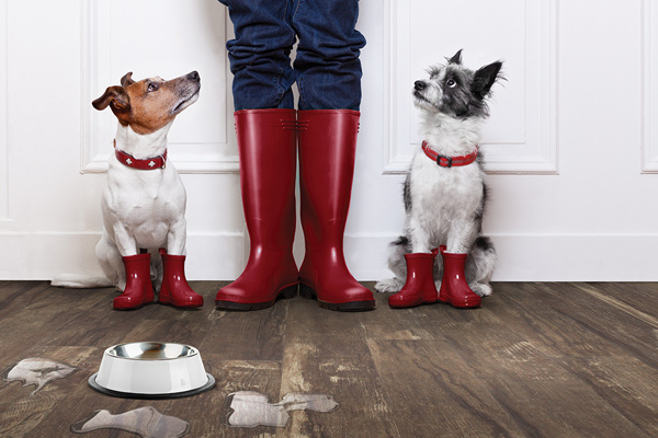 Hardwood Floors vs. Your Pets